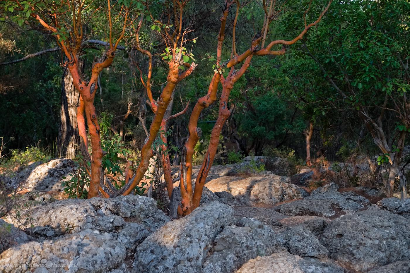 18. У края ущелья можно увидеть земляничное дерево с розовой корой. 1/250, 2.8, 250, -0.67, 48.