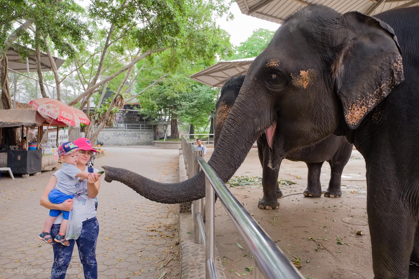 Фото 7. Если хотите накормить слона в Таиланде, то это не проблема. Та еще задачка – найти нормальную еду для ребенка! Снято на Fuji X-T10 + Fujifilm 16-55mm f/2.8. Настройки: 1/100, 2.8, 250, +0.33, 16.