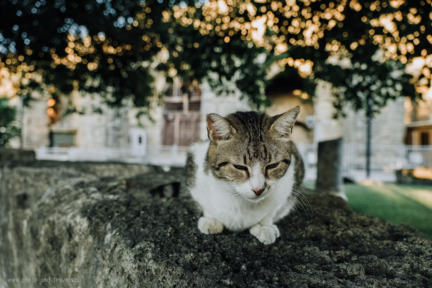 Фото 14. Кот, уставший слушать рассказы гидов об истории Сиде. 1/80, 2.8, 250, 17.
