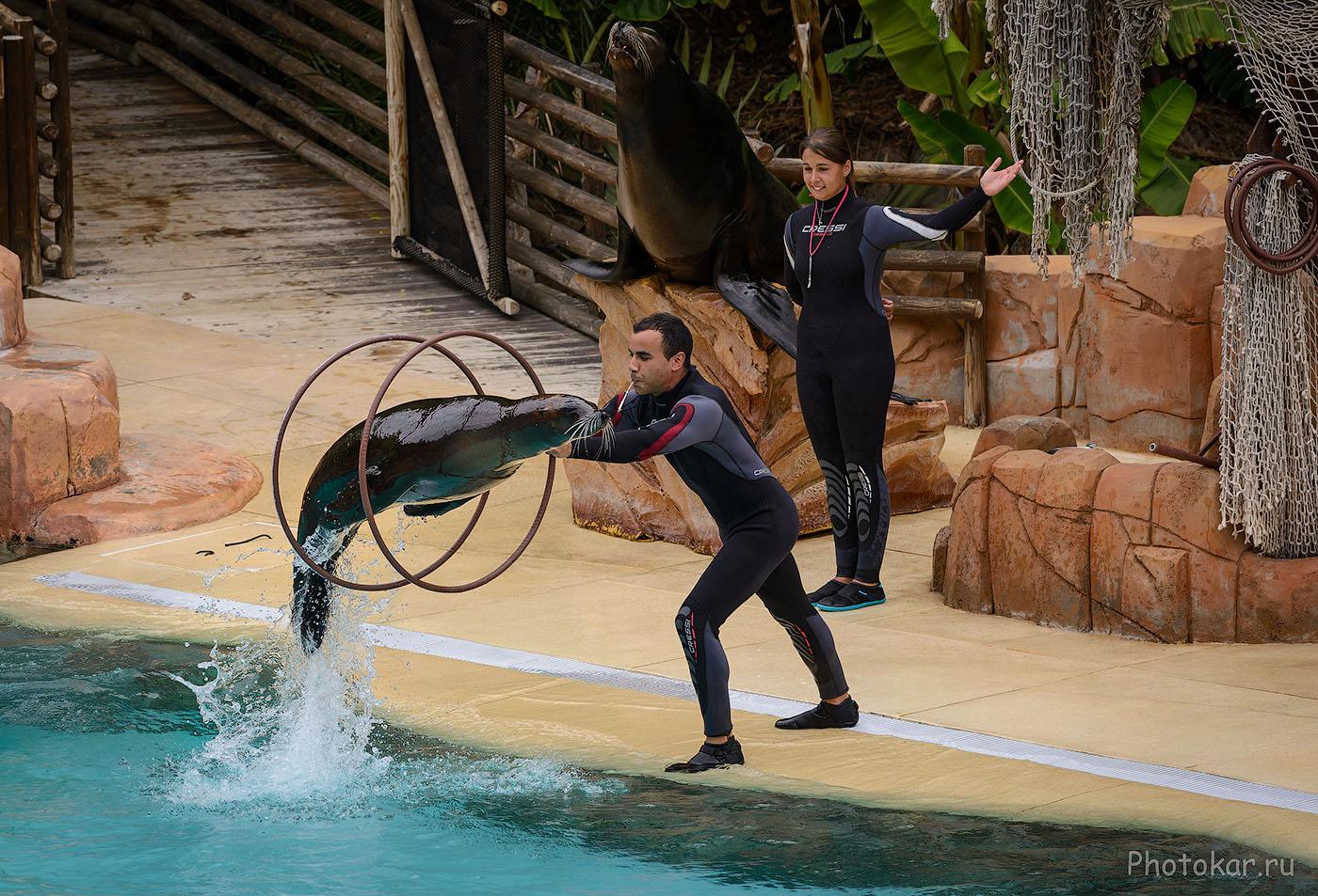 10. Фотографируем на экскурсии в дельфинарий во время отпуска. Определите, на что снято: на Fuji X-T2 или Никон Д610?
