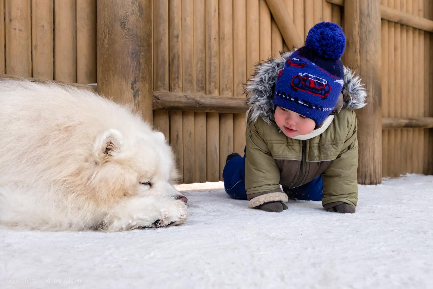 15. Первое близкое общение маленького человека с собакой.
