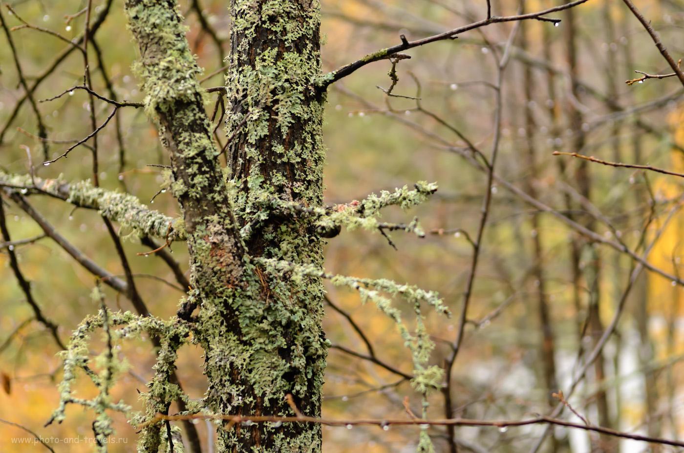 """Фотография 13. В древнем лесу. Отчёты туристов о поездке в парк """"Оленьи ручьи"""" самостоятельно. 1/125, 3.5, 250, -1, 55."""