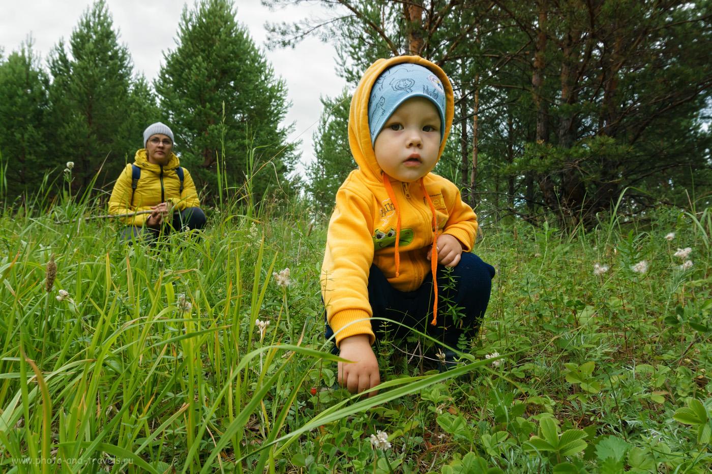 6. Хорошее место для прогулки с маленьким ребенком. И земляника уже созрела. 1/320, 9.0, 500, -0.7, 16.