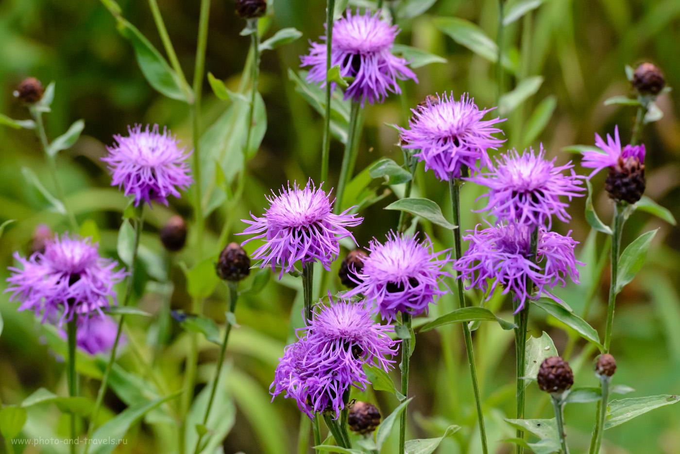 9. Так выглядят самые распространенные (по моей версии) в уральских лесах цветы. 1/400, 8.0, 2800, -1.0, 200.
