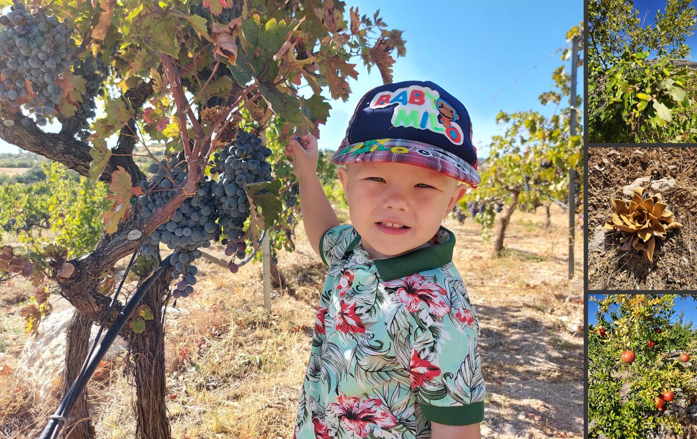 Фото 2. По пути к Арке в каньоне Сасон (Mut Sason Kanyonu) туристы могут увидеть, как растут гранаты, яблоки, виноград и другие фрукты.