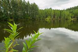 S naborom (Nikon D5100 KIT 18-55 VR + makrofil'try Close-Up) ja proguljalsja po lesu i poproboval fotografirovat' murav'ev i kuznechikov. Fotootchet.