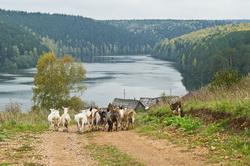 Fotografii Hrama v Belogor'e na rassvete i pejzazhi derevni Nizhnjaja Sinjachiha.