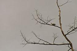 Progulka po osennemu lesu s kameroi Nikon D5100 s teleobieektivom Nikon 70-300mm f 4 5-5 6G neozhidanno poluchilos pookhotitsia na teterku
