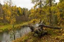 Samye krasivye mesta v prirodnom parke Olen'i ruch'i. Karta interesnyh marshrutov.