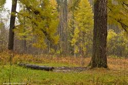 Krasivye vidy na skalu Pisanica v prirodnom parke Olen'i ruch'i v Sverdlovskoj oblasti