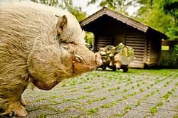 V okrestnostiakh Frankfurta-na-Maine nakhoditsia otkrytyi zoopark Opel Zu Opel Zoo Zveri tam takzhe soderzhatsia v prostornykh volerakh da takikh bolshikh chto ikh trudno razgliadet.