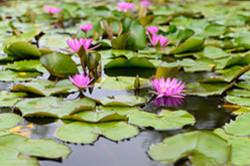 Prodolzhenie otzyva o poezdke v Muang Boran Ogromnye kuvshinki i lotosy Mini-kopiia istoricheskogo parka Sukkhotai.