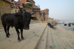 Pervaya glava otzyva o poezdke v Indiyu v 2015 godu. Togda my, krome Varanasi, pobyvali v Gimalayah i na fotosafari v zapovednike «Kaziranga». Podrobnoe opisanie, kak kupit' bilety na indijskij poezd.