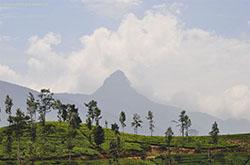 Пик Адама Шри-Ланка как добраться высота и фото