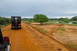 Pavliny v Nacional'nom Parke Jala v Shri-Lanke.